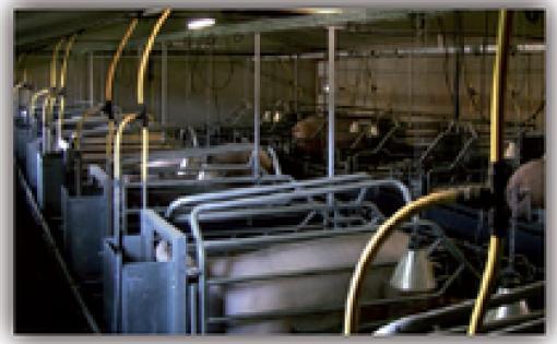 Premium élevage